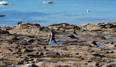 peche a pied Morbihan